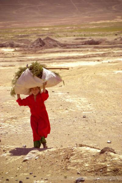 Girl doing field work, Bagrame, July 2004